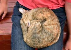 Кот и мальчик стоковое фото rf