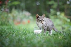 Кот и молоко Стоковая Фотография RF