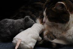 Кот и мышь стоковое фото rf