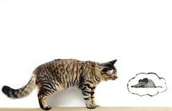 Кот и мышь Стоковая Фотография RF