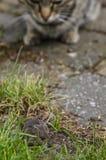 Кот и мышь Стоковая Фотография