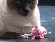 Кот и мышь Стоковое Фото