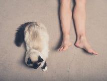 Кот и ноги молодой женщины на ковре Стоковая Фотография