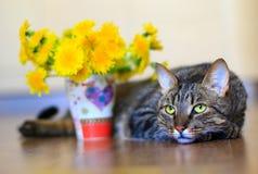 Кот и одуванчики Стоковые Изображения RF