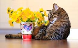 Кот и одуванчики Стоковое Изображение RF