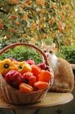 Кот и перцы стоковая фотография rf