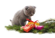 Кот и подарки рождества стоковые фотографии rf