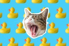 Кот и резиновый коллаж утки, дизайн концепции искусства попа Минимальная живая предпосылка лета иллюстрация штока