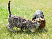 Кот и собака в саде Стоковые Изображения RF