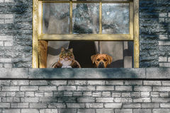 Кот и собака наблюдая от окна Стоковое Изображение RF