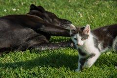 Кот и собака ослабляя Стоковые Изображения