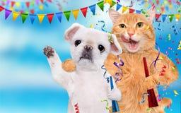 Кот и собака празднуют Стоковое Изображение