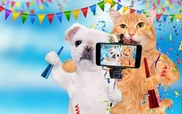 Кот и собака празднуют Стоковые Изображения RF