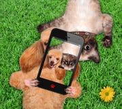Кот и собака принимая selfie стоковые фотографии rf