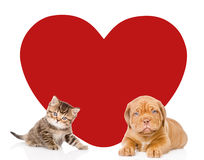 Кот и собака при большое красное сердце смотря камеру Космос для текста изолировано Стоковое Фото