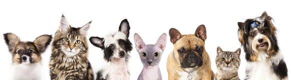 Кот и собака стоковые изображения rf