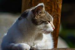 Кот и солнечное после полудня Стоковая Фотография