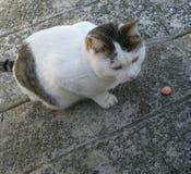 Кот и сосиска Стоковые Изображения RF