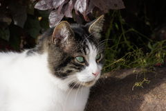 Кот и утес Стоковое фото RF