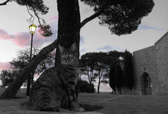 Кот и церковь Стоковое Изображение