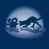 Кот, камера и фильм Стоковое фото RF
