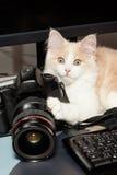 кот камеры немногая Стоковые Изображения RF