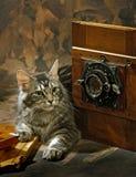 кот камеры Стоковое Изображение