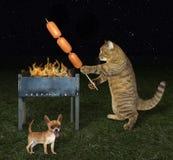Кот кашевара около его собаки стоковое фото rf