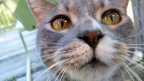 Кот киски на палубе Стоковая Фотография