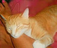 Кот киски спать оранжевый Стоковое фото RF