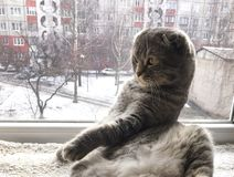 Кот кладя на окно closer стоковая фотография rf