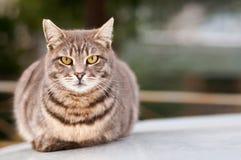 кот кладя сидеть Стоковое фото RF