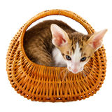 кот корзины немногая Стоковая Фотография