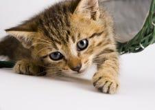 кот корзины Стоковое фото RF