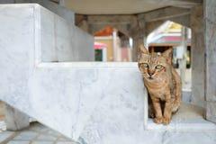 Кот коричневого цвета Protrait, милый кот стоковое фото rf
