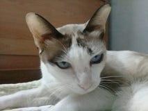 кот кота стоковое изображение