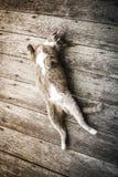 Кот котенка спать стоковое изображение rf