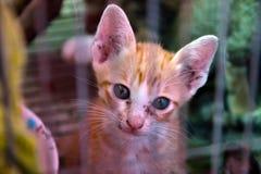 Кот котенка Стоковое Изображение