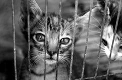 Кот котенка Стоковые Изображения