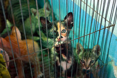 Кот котенка Стоковое фото RF