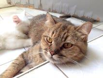 Кот & котенок мамы Стоковое Изображение