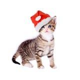 Кот/котенок с шляпой рождества Стоковые Фото