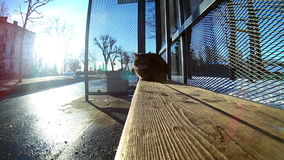 Кот который живет на автобусной остановке видеоматериал