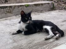 Кот который расслабляющий и фото стоковые фото