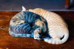 Кот который спит Стоковые Изображения