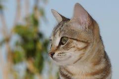 Кот, коты, киска стоковая фотография rf
