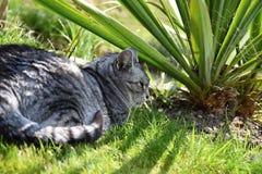 Кот Кот Tabby лежа в заводе сада Стоковая Фотография