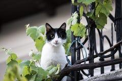 Кот кофе Стоковая Фотография