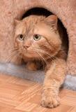 Кот красного цвета денежного мешка Стоковое Фото
