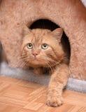 Кот красного цвета денежного мешка Стоковое Изображение